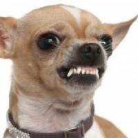 Osäkra hundar eller aggressiva?