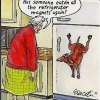 Udda ätvanor hos hundar.
