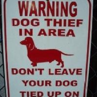 Seths egna hundar inblandade: Hundtjuvar och hundkamper - offren söks i parkeringshus och utanför butiker