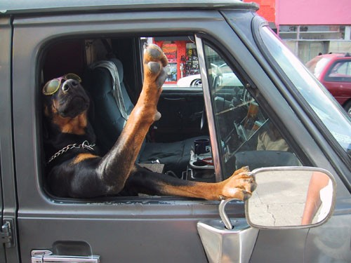 cool-dog-driving-a-car