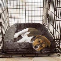 Hund i bur - regler