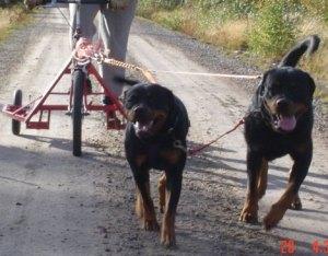 Ada till vänster och Rolf till höger.