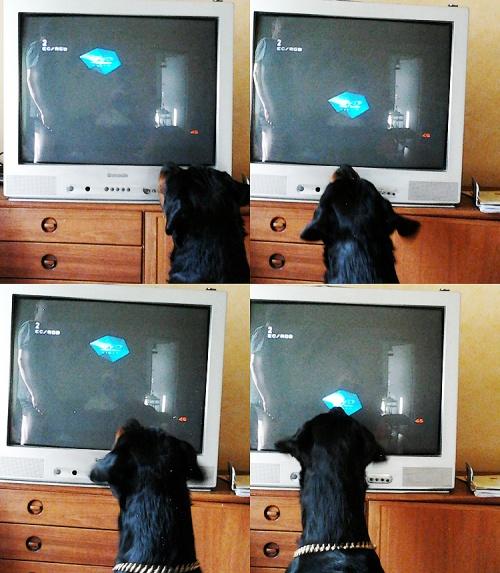 jagar TV