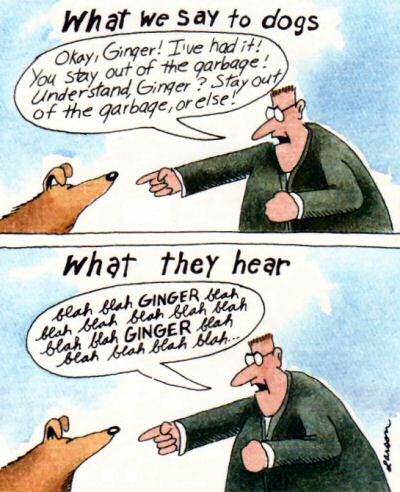 hur hundar förstår