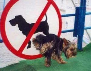 hund verboten