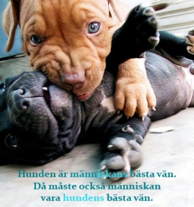 plaing pups