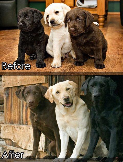hund före efter