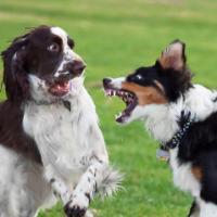 Vems ansvar i hundrastgård?