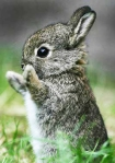 rabbit small