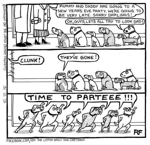 nyårsfest hund