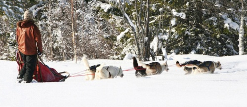 Seth på tur med sina polarhundar som gärna övernattade ute