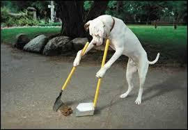 bajsplockar hund