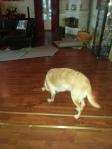 Hunden som inte gick på golv - forts. Möte 2-3.