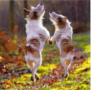 dancing_dogs_jpg1