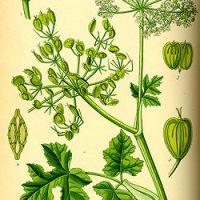 Koll på växter mm som är giftiga för hund.