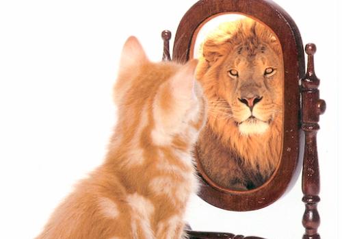 lejon i spegeln