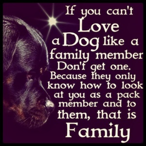 If you cant love a dog