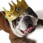 dog-king-tn