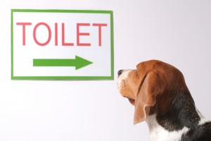 How-to-Potty-Train-Your-Dog-300x200