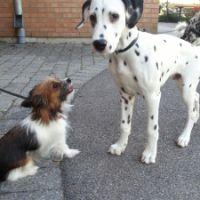 2. Hundmöten