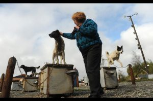 Alaska dog house