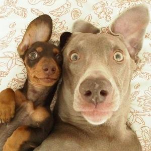 dods selfie
