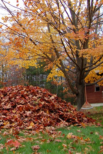 rake-leaves-pile-landscaping-network_9089