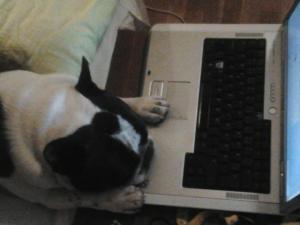 I väntan på mig en kväll och Tiger tyckte det var sängdags somnade han mot den varma datorn