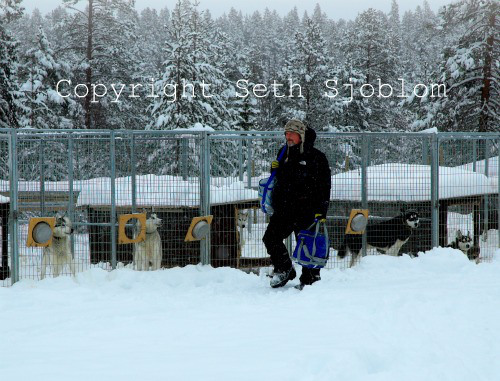 När snön stod hög hoppade hundarna över hundgårdarnas stängsel utan svårighet. Foto på Seth Sjöblom kl.05 i förberedelse inför dagen.