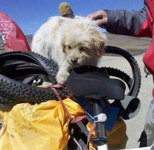 Den hemlöse kinseiska hunden Xiaosa adopterade laget och blev adopterad