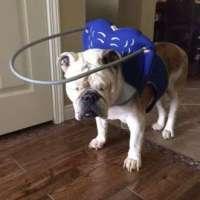 Praktisk hjälp för blinda hundar