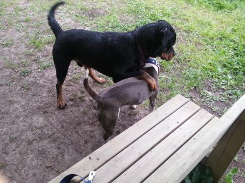Gunvald och Harry lär känna varandra och hundpratar om reglerna