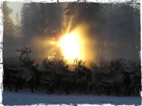 Foto Benny Jonsson Idre sameby