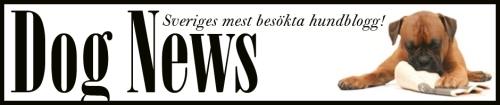 Vi gillar också att läsa DOG NEWS - med hundnyheter på svenska varje dag