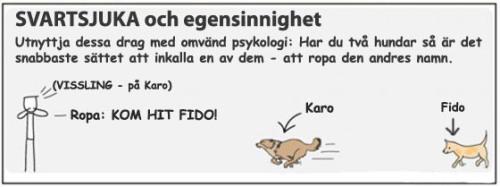 hund omvändpsykologi