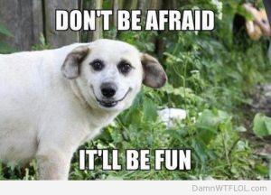 dog will be fun
