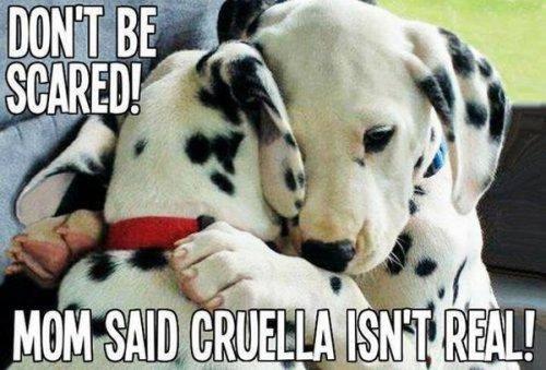 dog cruella