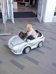 Hund..coachen på väg!
