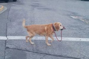 dog own leach
