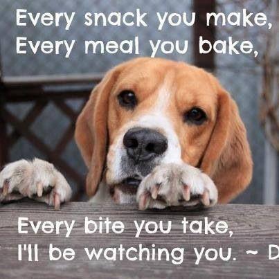 dog watching every food step