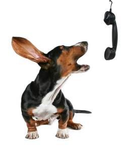 a bassett hound howling on the phone