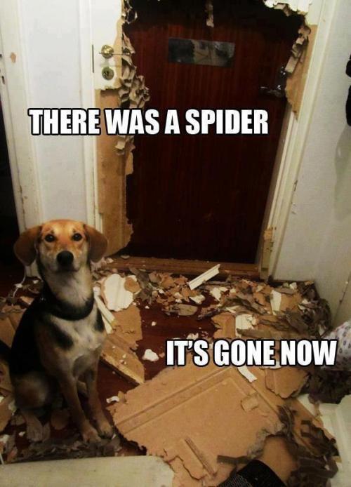 dog spider