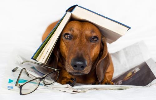 """""""Pluggar till matteprov - men den här litteraturboken verkar inte hjälpa.."""""""