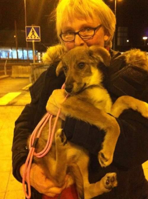 Lena hämtar Elsa på Arlanda när Elsa fyllt 4 månader, eftersom de inte vill skicka yngre hundar