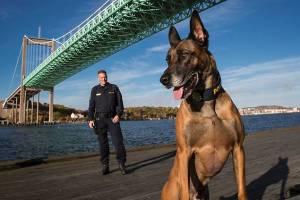 Den belgiske vallhunden Herman med sin förare, polismannen Petter Fransson Foto: Sören Håkanlind /GP
