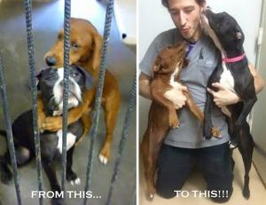Timmar innan avlivning räddas hundarna. http://www.earthporm.com/shelter-dogs/