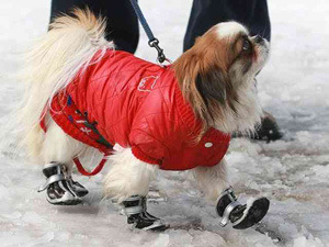 dog-in-boots