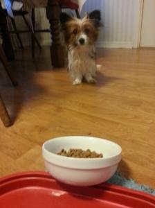 Menar du att jag ska ÄTA ur den där skålen?