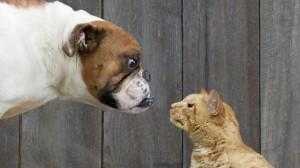 dog grumpy dog