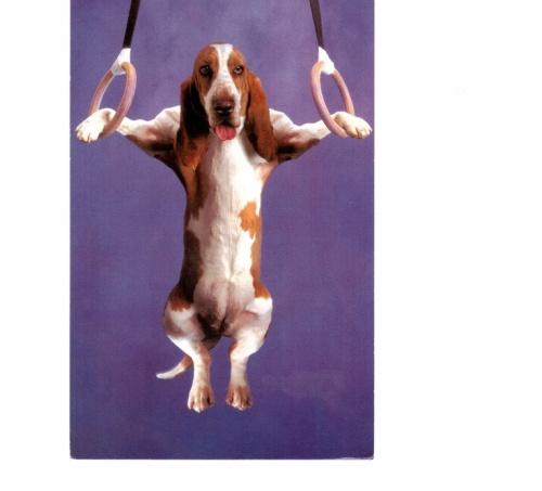 dog gymnastics
